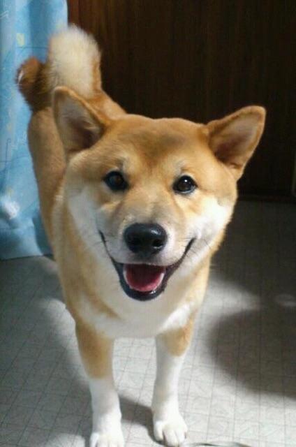 http://www.uchida-kk.jp/blog/IMG_0910.jpg