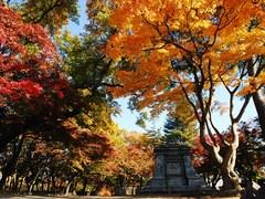 1盛岡城跡公園.JPG